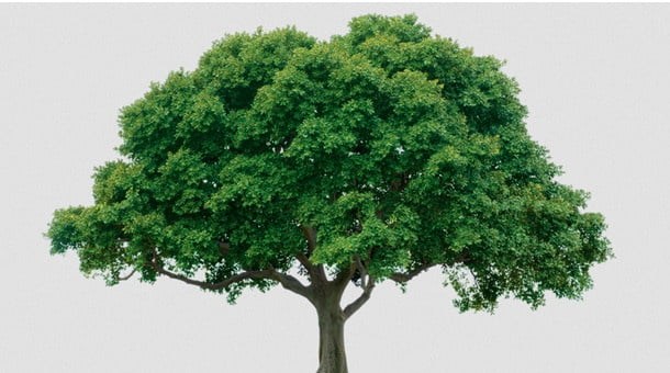 Emre itaat eden ağaç